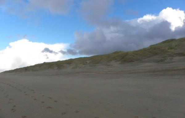 Dünen in der Nähe von Katwijk