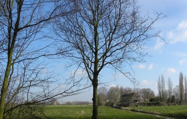 Farmhouse near Vlaardingen