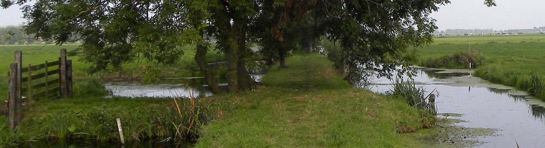 Gras Weg in das Grüne Herz
