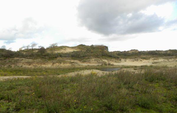 Duinen bij Scheveningen