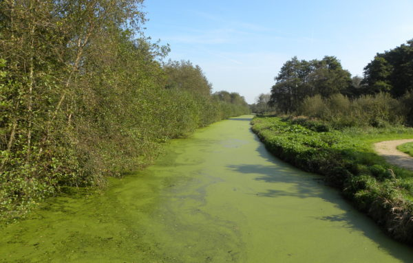 Canal in Green Heart