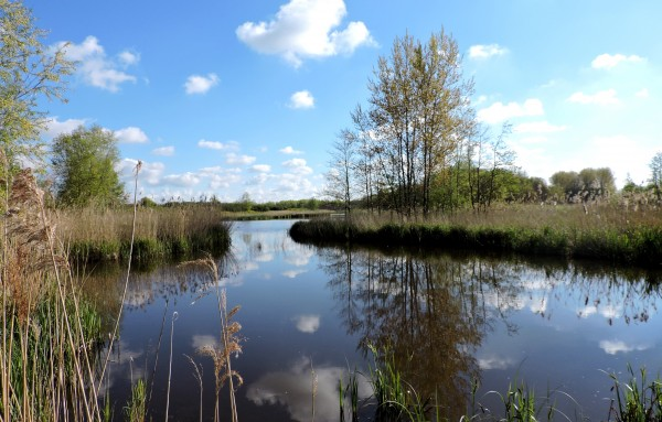 Marsh near Delft