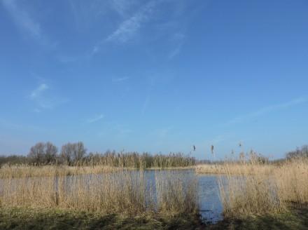 Natur in der Nähe von Delft