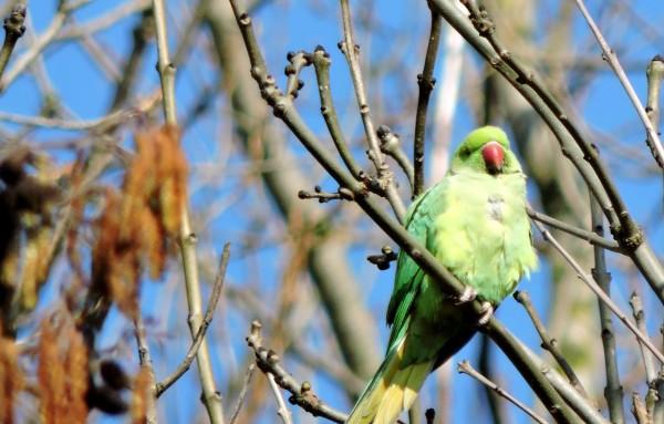 Rare bird in Delft