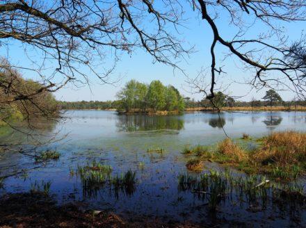 Ven tussen Wijk bij Duurstede en Amerongen