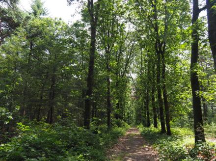 Forest between Amerongen en Wageningen