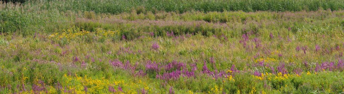 Field near Wageningen