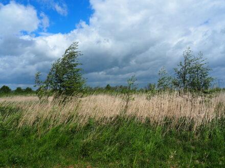 Near Woerden